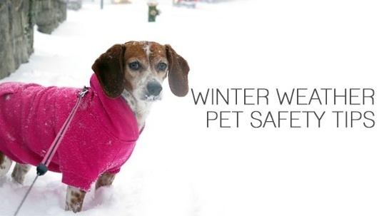 <a href='http://potsdamhumanesociety.org/wp/?p=6581'>Winter Weather Pet Safety Tips </a>