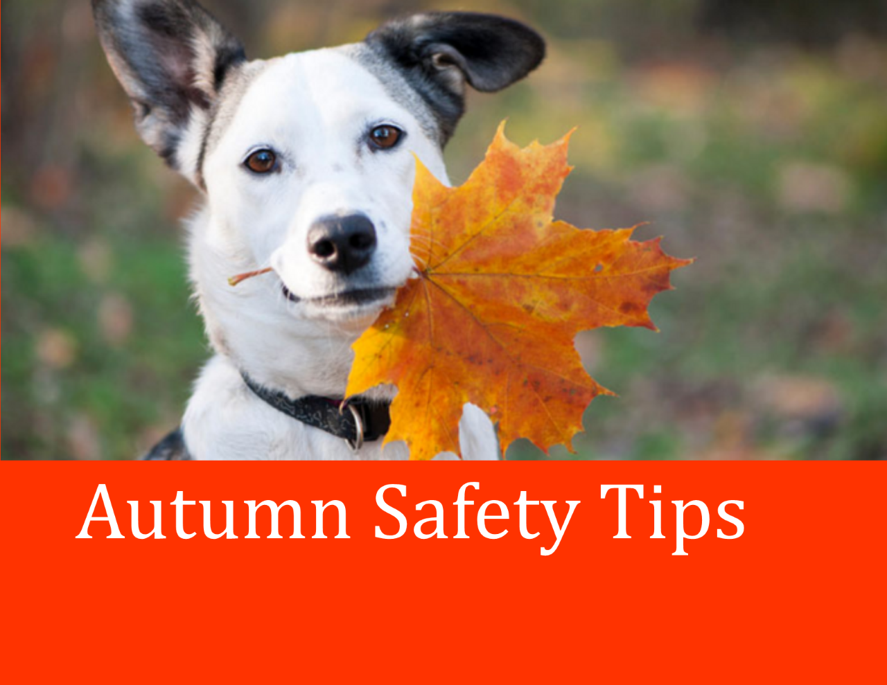 <a href='http://potsdamhumanesociety.org/wp/?p=8847'>Autumn Safety Tips</a>