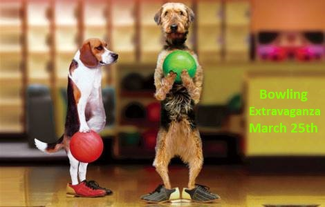 <a href='http://potsdamhumanesociety.org/wp/?p=6733'>Bowling Extravaganza Fundraiser March 25th</a>