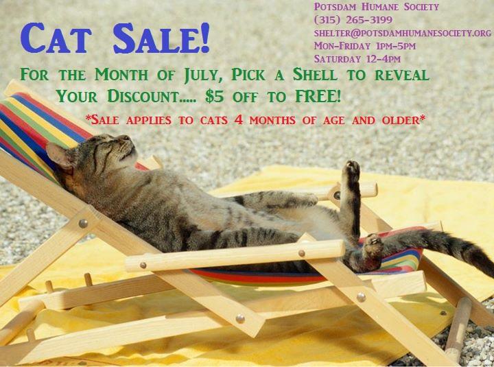 <a href='http://potsdamhumanesociety.org/wp/?p=5769'>PHS Cat Sale! </a>