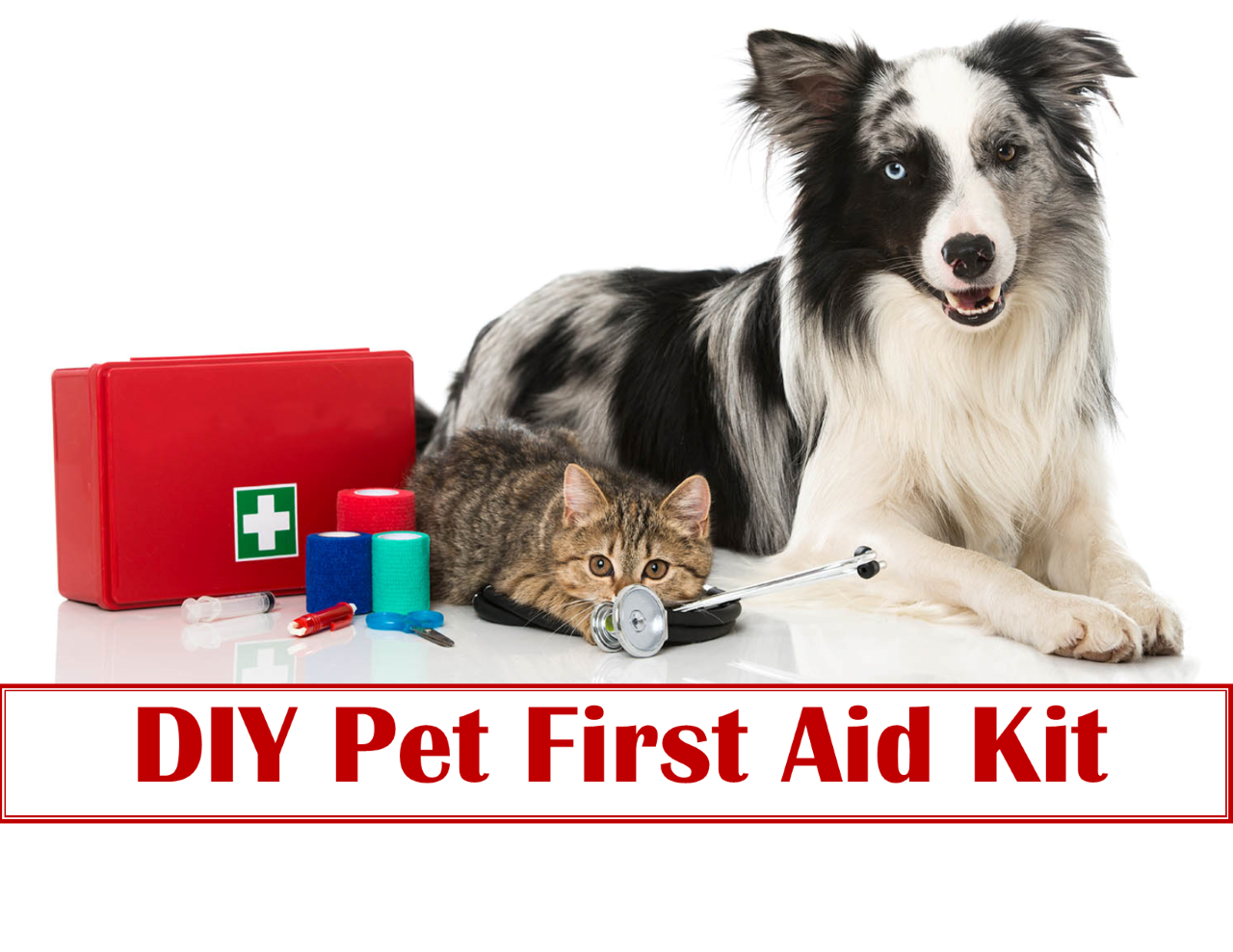 <a href='http://potsdamhumanesociety.org/wp/?p=11185'>Pet Poison Prevention: Be Prepared</a>