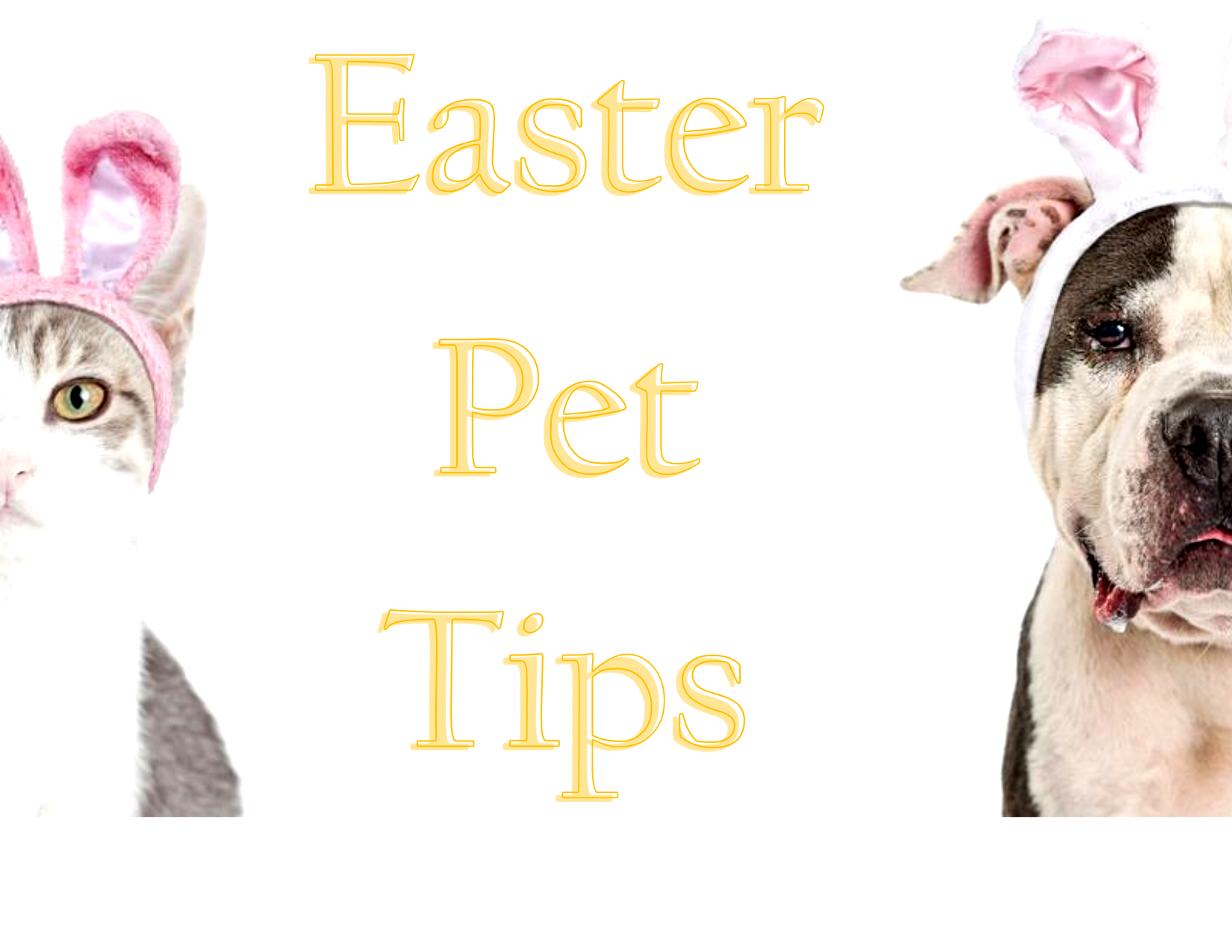 <a href='http://potsdamhumanesociety.org/wp/?p=11270'>Easter Pet Tips </a>