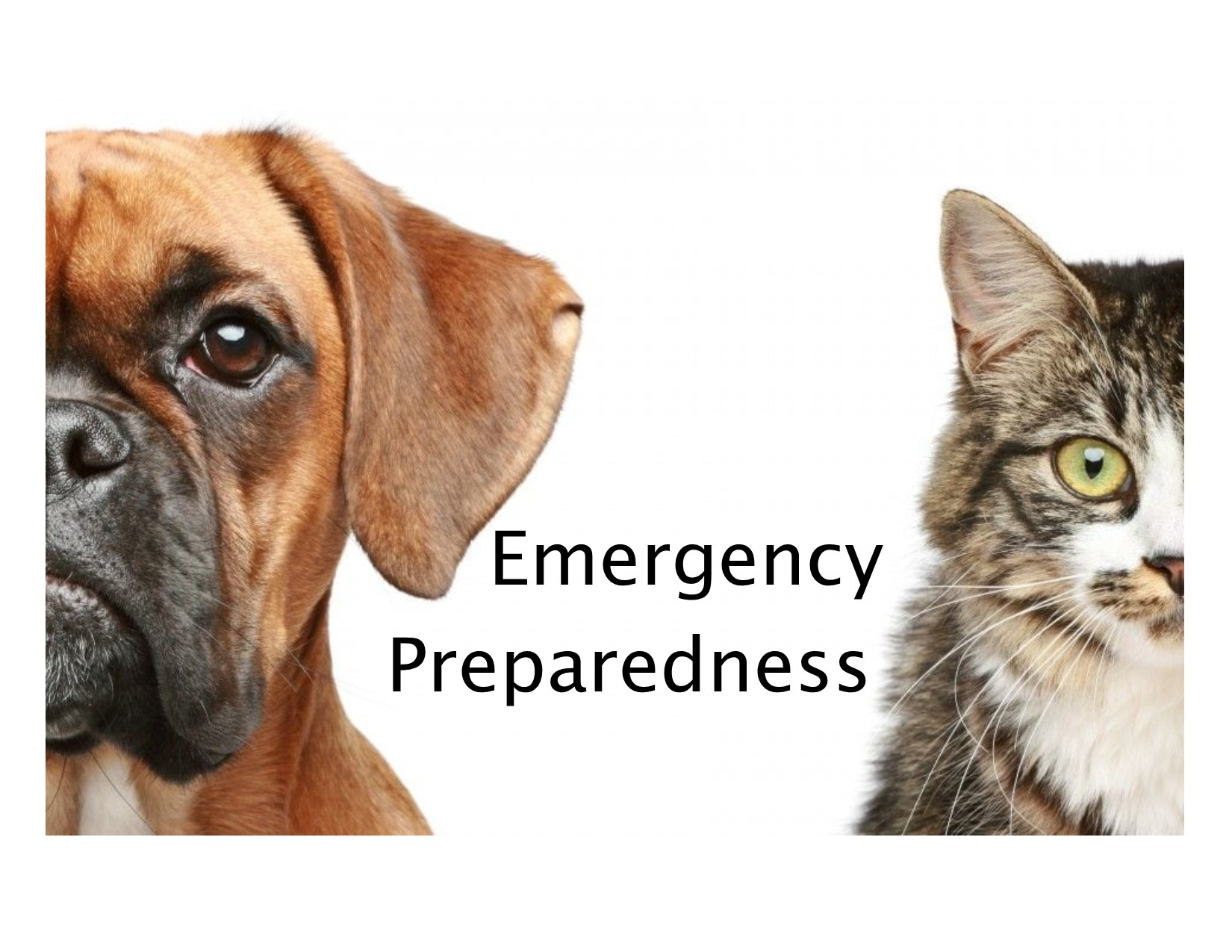 <a href='http://potsdamhumanesociety.org/wp/?p=7462'>Preparing Your Pets for Emergencies</a>