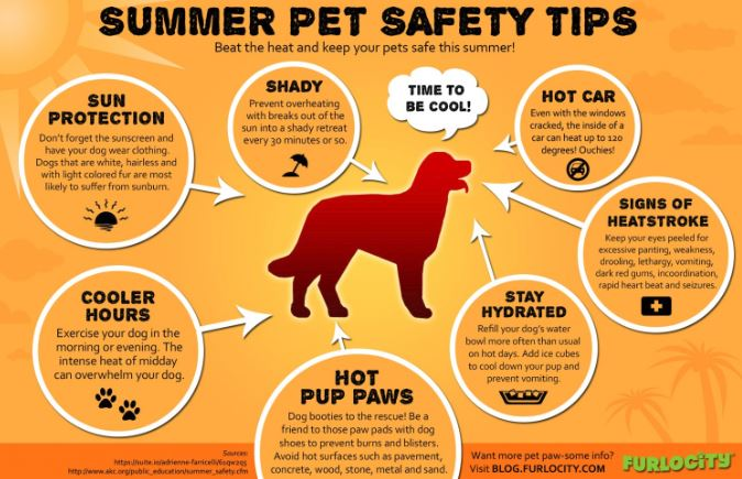 <a href='http://potsdamhumanesociety.org/wp/?p=7142'>Summer Weather Pet Tips </a>