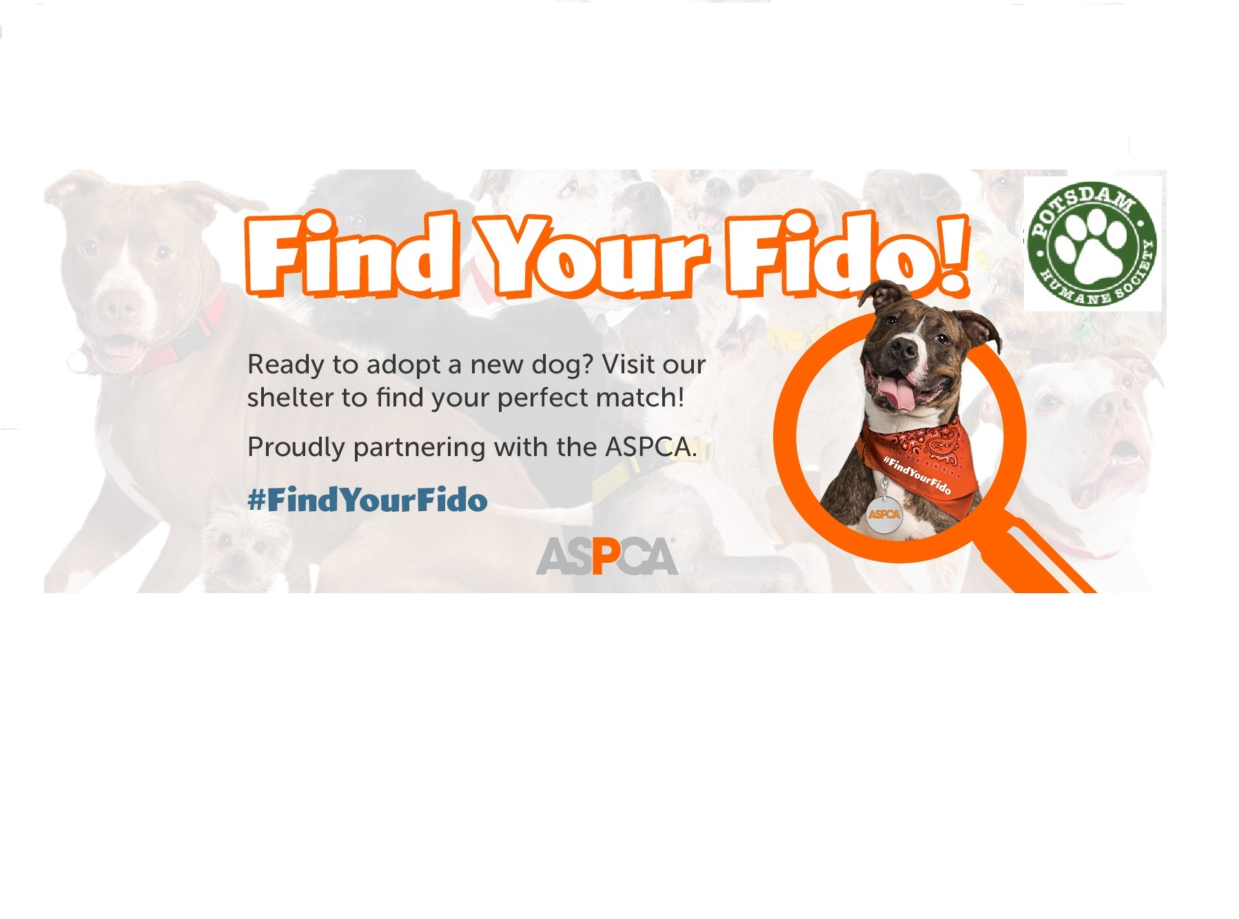 <a href='http://potsdamhumanesociety.org/wp/?p=6229'>October is Adopt A Shelter Dog Month! </a>