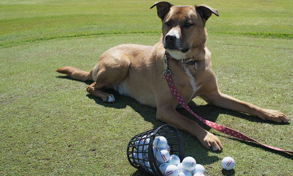 <a href='http://potsdamhumanesociety.org/wp/?p=5654'>7th Annual PHS &quot;Pets for Vets&quot; Golf Tournament July 28th </a>