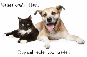 spay-n-neuter