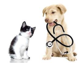 vet-services