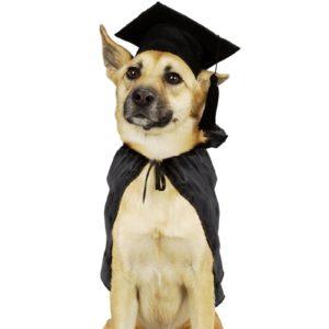 GraduatingDog